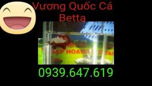 VuongQuocCaBetta_ThangBa_01_01