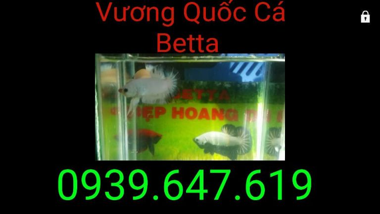 VuongQuocCaBetta_ThangBa_03