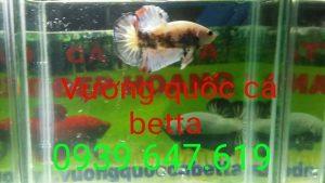 VuongQuocCaBetta_ThangBa_05