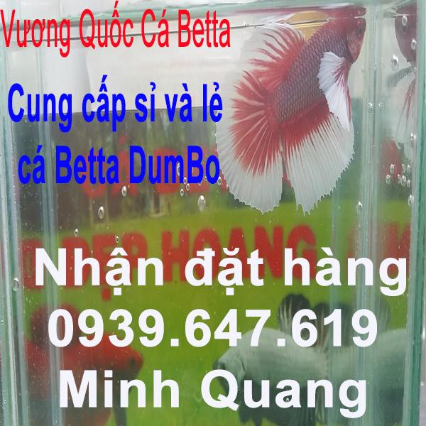 VuongQuocCabetta_Dumbo