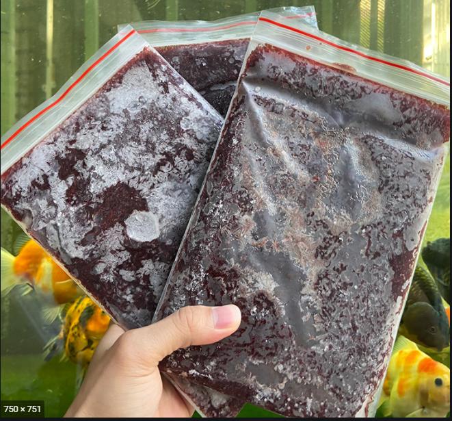 Trùng Huyết Đôngh Lạnh - Thức ăn cho cá betta